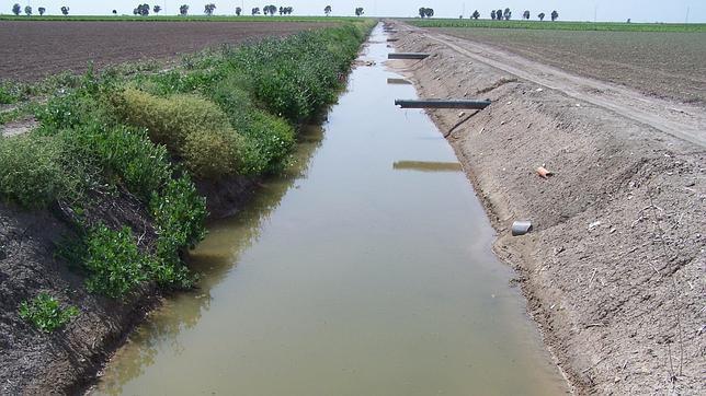 Tuberías de las obras de modernización que finalizan en un canal en mitad de la marisma