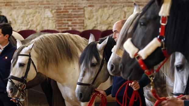 Caballos de Pura Raza Española en las dependencias de Caballerizas Reales