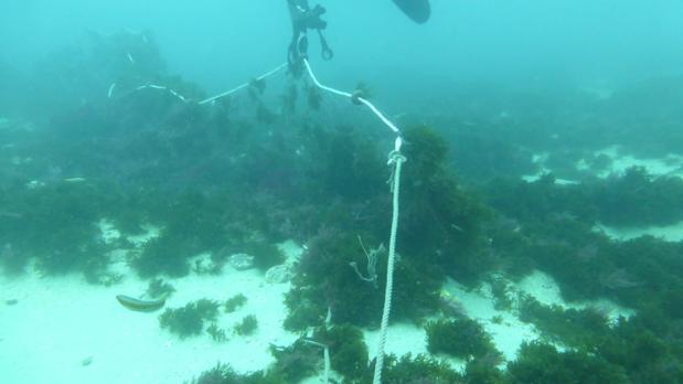 Imagen de una de las redes abandonadas encontrada por los ecologistas