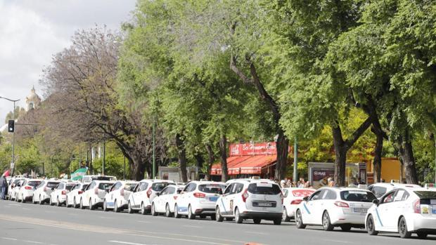Taxistas en protesta por Sevilla
