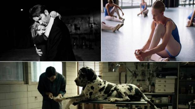 Fotogramas de las películas «Cold War», «Girl» y «Dogman»