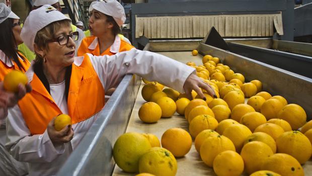 Los agricultores españoles piden protección frente a los cítricos de Sudáfrica, Egipto y Turquía