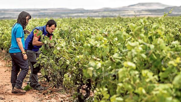 El apoyo a los jóvenes agricultores ha sido una línea de acción prioritaria