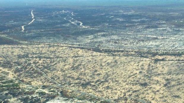 Cifran el impacto económico de un incendio forestal sobre las especies emblemáticas