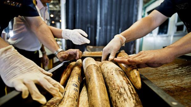 Singapur prohíbe el comercio de marfil tras la incautación récord de 9 toneladas