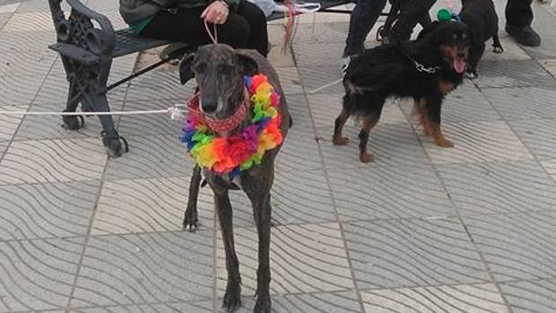 Este sábado se celebra un carnaval para perros con un fin solidario