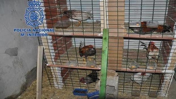 Un vecino de La Rinconada se enfrenta a una multa de hasta 3.000 euros por tener en su casa 25 jaulas de gallos