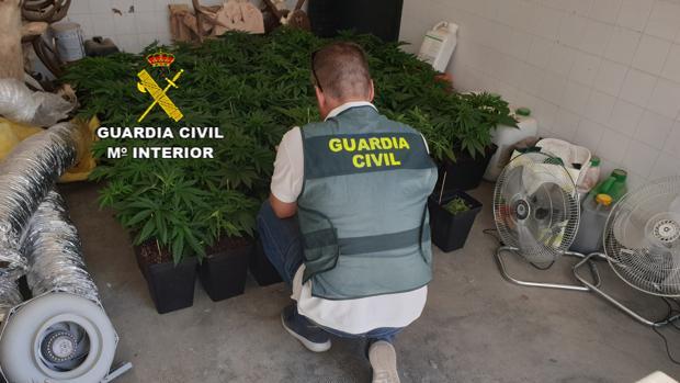 Plantación de marihuana destapada por la Guardia Civil en Osuna