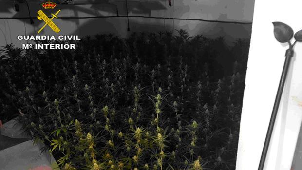 Un vecino de Jerez ha sido detenido en Pilas como responsable de una plantación indoor con 850 plantas de marihuana