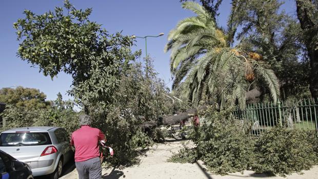Se desprende un árbol del parque de María Luisa
