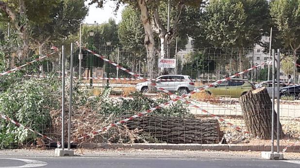 Tala de árboles en la avenida Flota de Indias de Sevilla